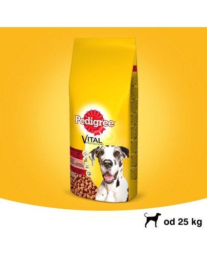 Adult 15 kg (duże rasy) - sucha karma dla psów z wołowiną