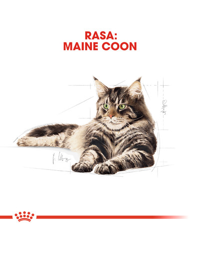 Maine Coon Adult karma sucha dla kotów dorosłych rasy maine coon 4 kg