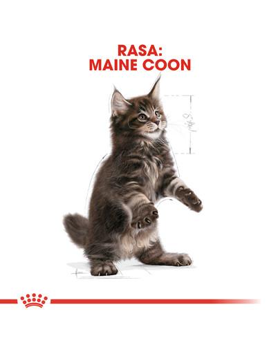 Maine Coon Kitten karma sucha dla kociąt, do 15 miesiąca, rasy maine coon 4 kg
