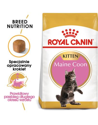 Maine Coon Kitten karma sucha dla kociąt, do 15 miesiąca, rasy maine coon 2 kg