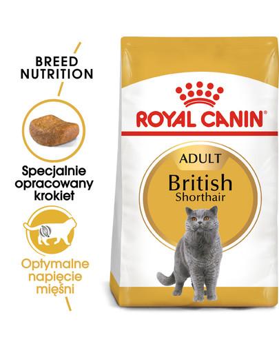 British Shorthair karma sucha dla kotów dorosłych rasy brytyjski krótkowłosy 400 g
