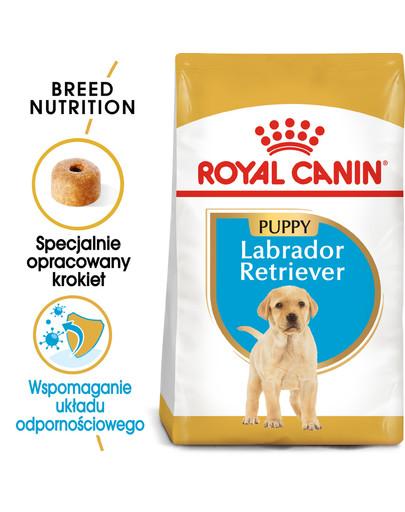 Golden Retriever Junior karma sucha dla szczeniąt do 15 miesiąca, rasy golden retriever 3 kg