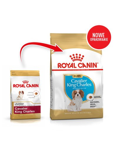 Cavalier King Charles Spaniel Puppy karma sucha dla szczeniąt do 10 miesiąca, rasy cavalier king charles spaniel 1,5 kg