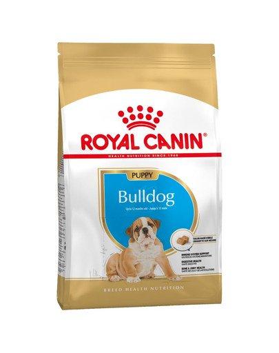 Bulldog Puppy 12 kg
