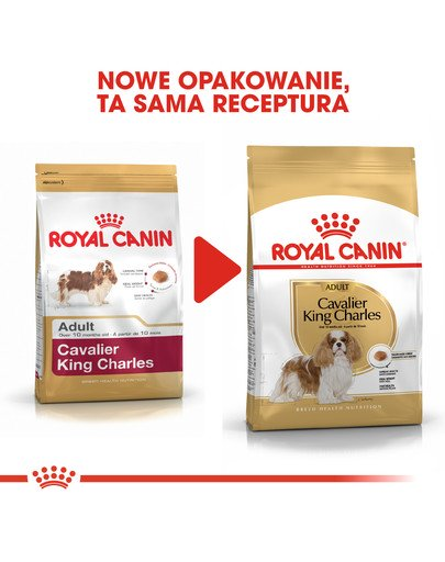 Cavalier King Charles Spaniel Adult 7,5 kg