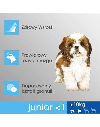 Junior (