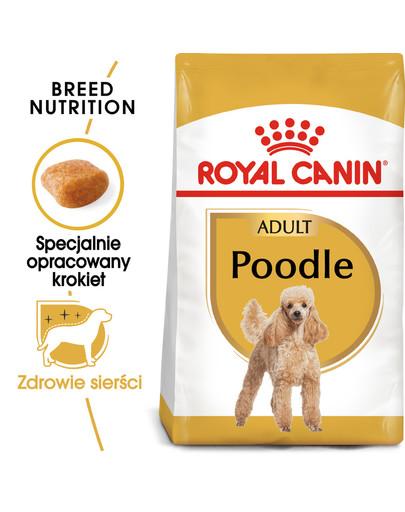 Poodle adult 0.5 kg karma sucha dla psów dorosłych rasy pudel miniaturowy