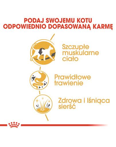 Siamese adult 4 kg karma sucha dla kotów dorosłych rasy syjamskiej