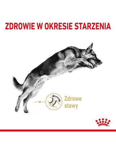 German Shepherd Adult 5+ 12 kg karma sucha dla dorosłych psów rasy owczarek niemiecki, powyżej 5 roku życia