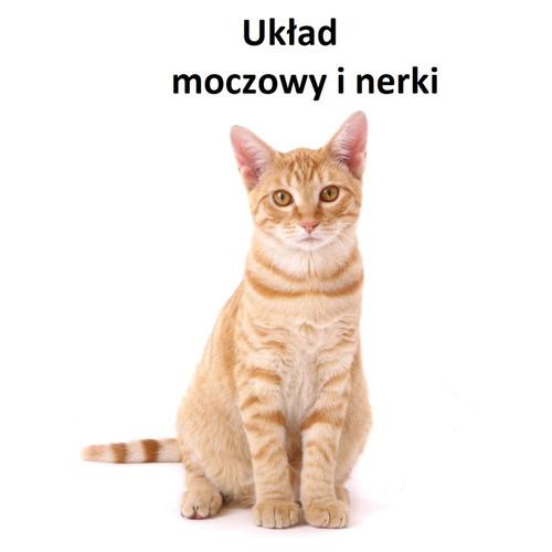 Rudy kot siedzący