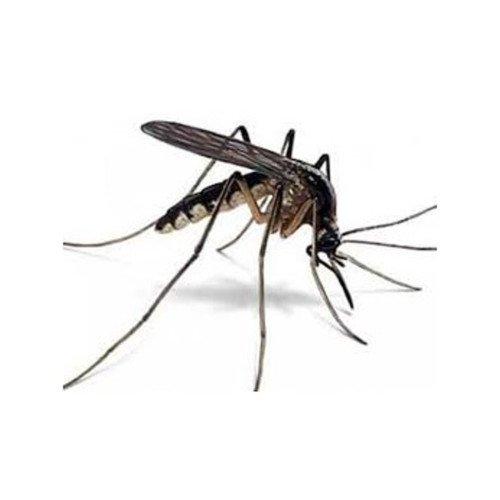 Preparat na komary