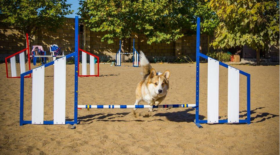 Co to jest agility? Czy małe zwierzęta i agility to dobry pomysł?