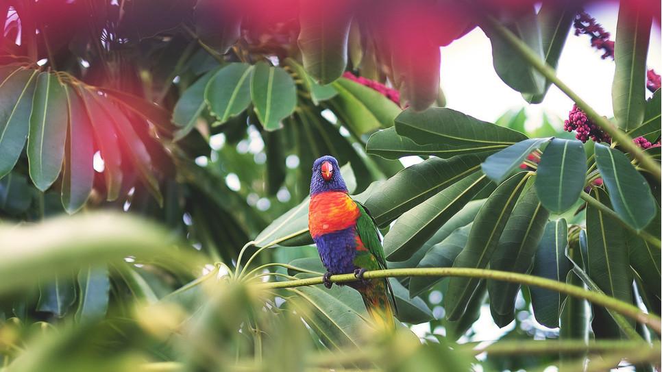 Papugi gadające spotkać można nie tylko w filmach. Żako, kakadu czy amazonkę można nauczyć mówić w warunkach domowych.
