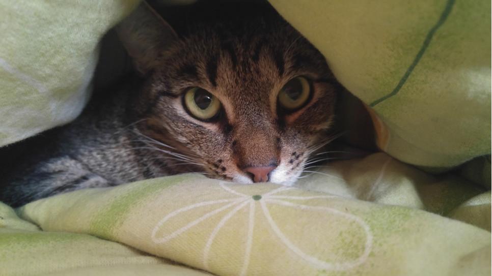 Co zrobić, gdy kot hałasuje w nocy?