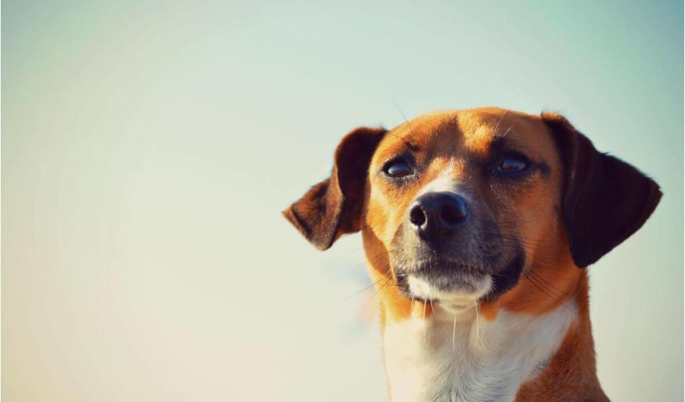 Wyjazd za granicę z psem, jak się do tego przygotować? I jakie szczepienia psa wykonać?
