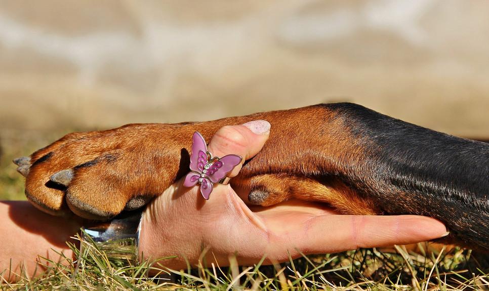 kiedy szczepić psa lub kota? Kalendarz szczepień