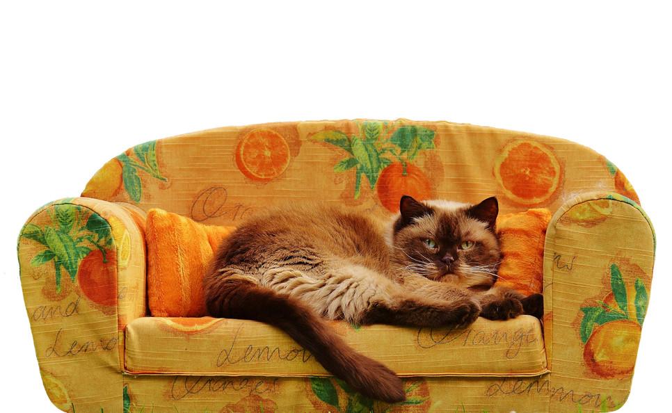 Hodowla kotów bywa dochodowym biznesem, lecz wymaga pasji, zaangażowania, kompleksowego i odpowiedzialnego podejścia.