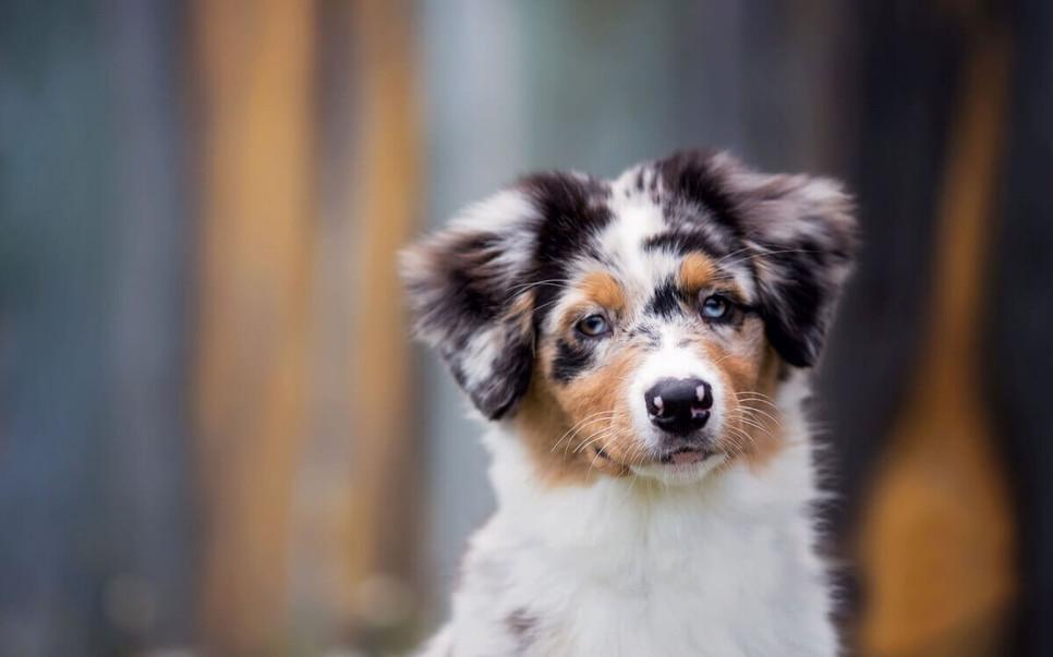 Wyjazd za granicę z psem lub kotem, czy jest można zabrać ze sobą zwierzę za granicę?
