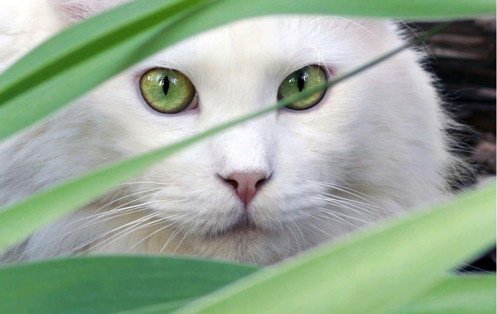 Co wybrać, aby ochronić kota przed kleszczami?