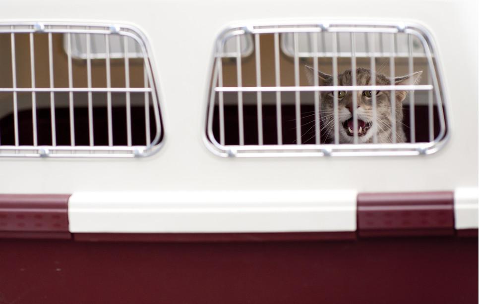 Podróż samolotem ze zwierzęciem - co należy wiedzieć?