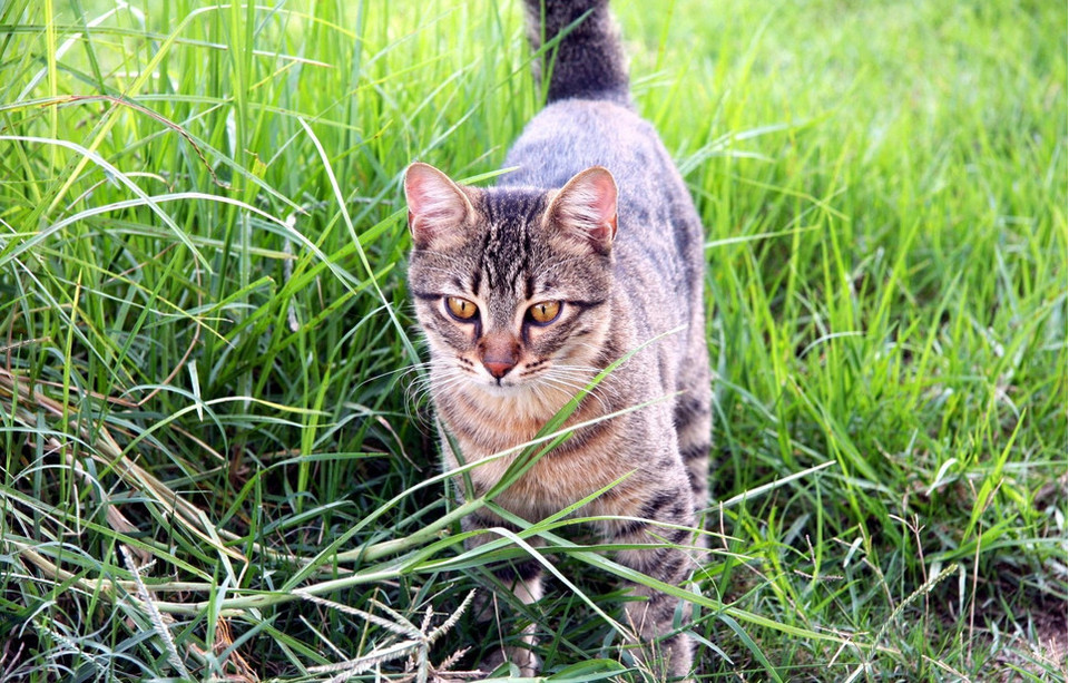 Kot znakuje teren, jak wygląda znakujący kot? Co oznacza znakowanie?