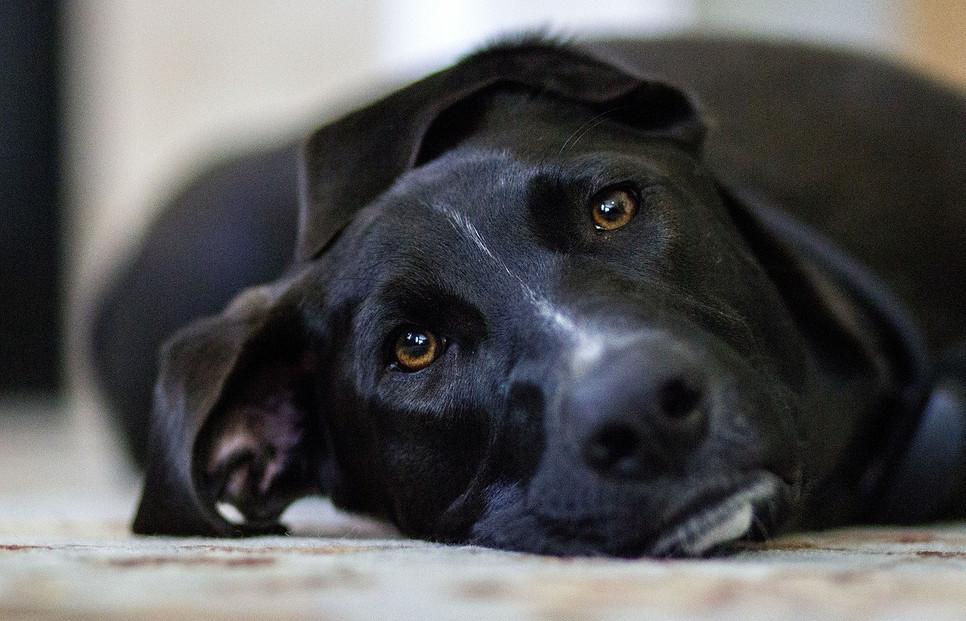 Jak udzielić psu pierwszej pomocy? Pierwsza pomoc dla zwierząt