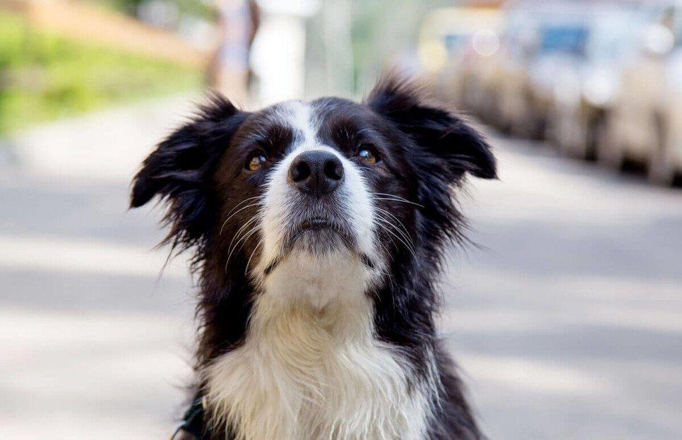 Jak wyrobić i ile kosztuje paszport dla psa?