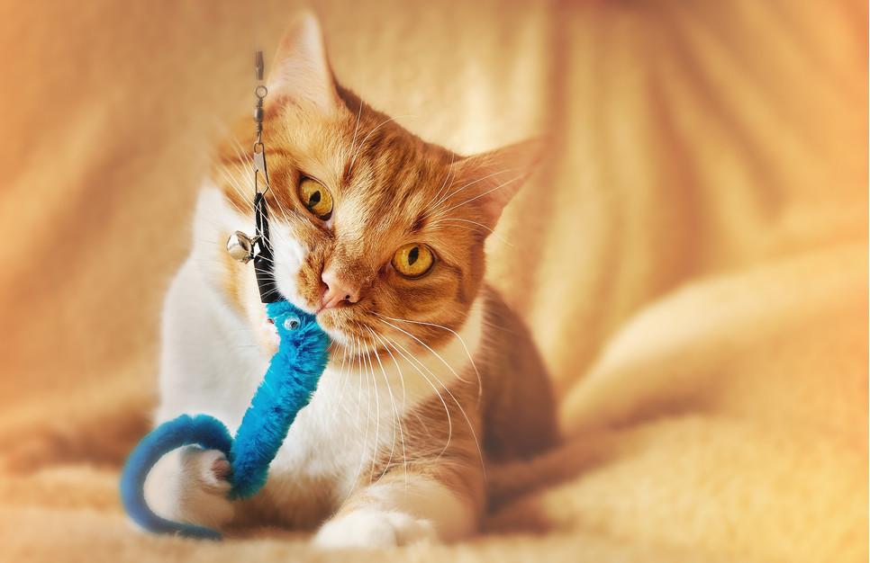 Zabawy z kotem powinny stanowić codzienną, rutynową czynność. Ich brak może mieć szereg negatywnych konsekwencji.