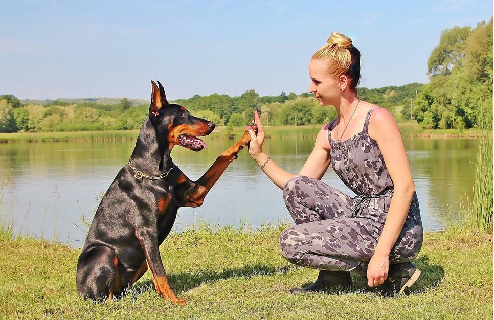Jak zmotywować psa do pracy? Jak zachęcić psa do treningów?