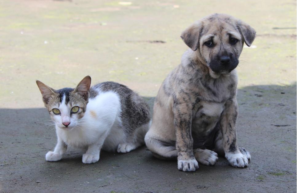 Nieleczone nieswoiste zapalenie jelit może być śmiertelnie niebezpieczne. Jak rozpoznać IBD u psów i kotów?