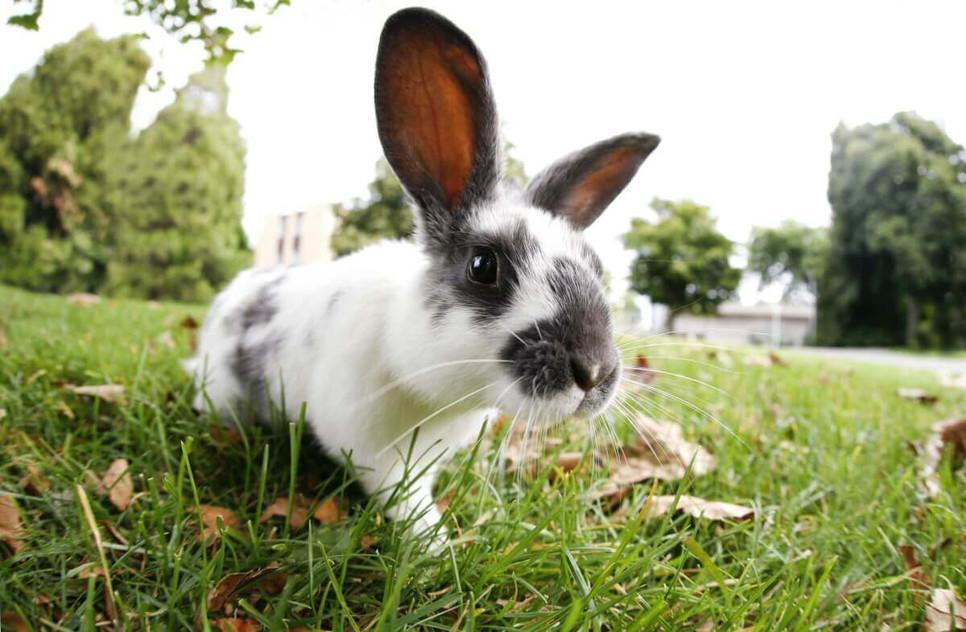 Jakie wybrać siano dla królika?
