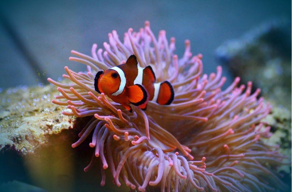 Akwarium słonowodne, czyli morskie, jest zdecydowanie trudniejsze do założenia niż słodkowodne.