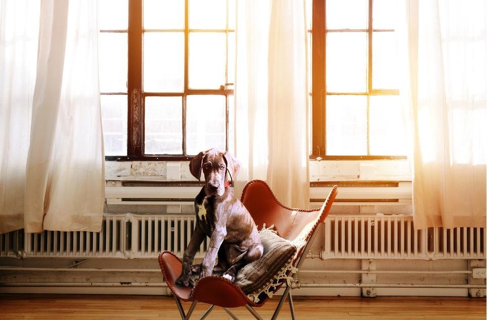 Aby odpowiednio wychować psa, należy poświęcić mu trochę uwagi.