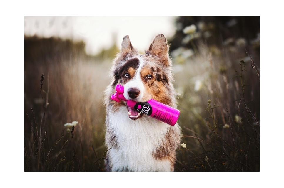 Poprawna pielęgnacja psów