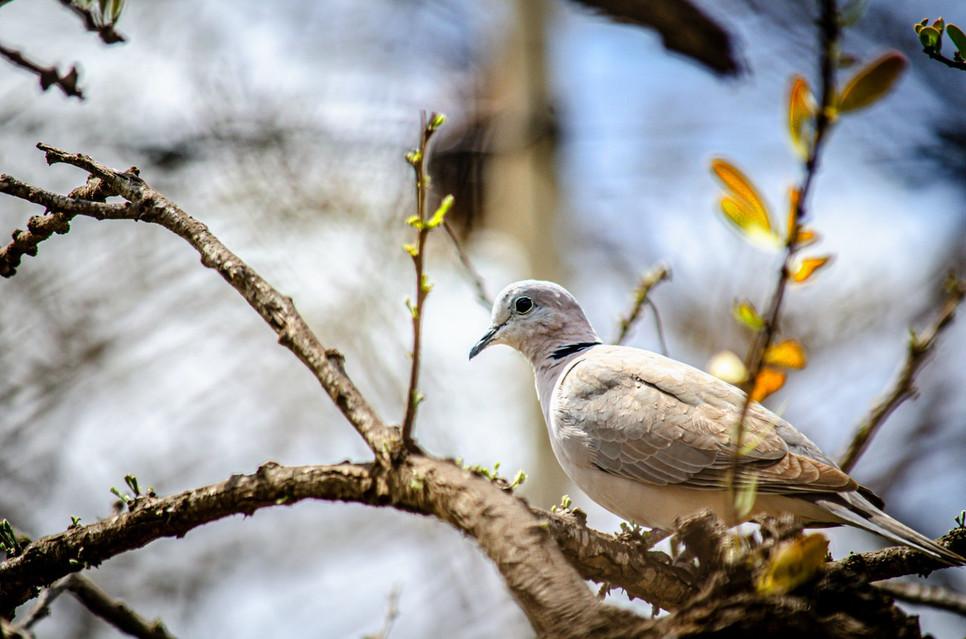 Niezależnie czy to gołębie pocztowe i ozdobne, czy miejskie, wszystkie mogą zachorować. Liczy się znajomość pierwszych objawów i profilaktyka.