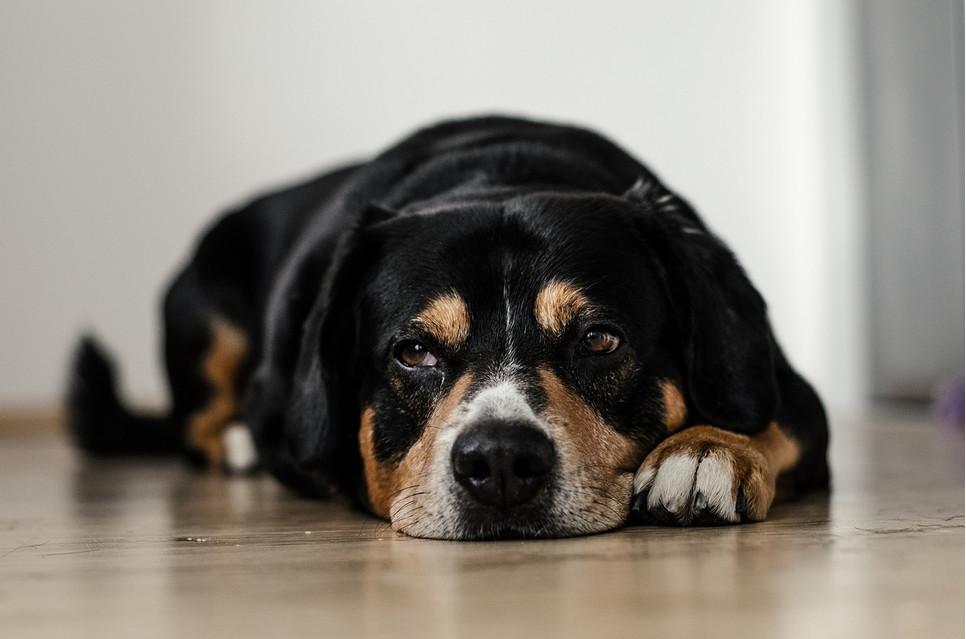 Jak pomóc psu i kotu przetrwać Nowy Rok? Czego nie podawać psu do jedzenia?