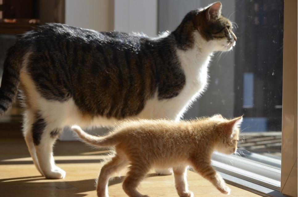 Ciąża kotki