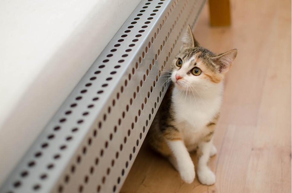 Każdy odpowiedzialny koci opiekun powinien wiedzieć jak podawać kotu tabletkę, aby było to bezpieczne, ale również skuteczne.