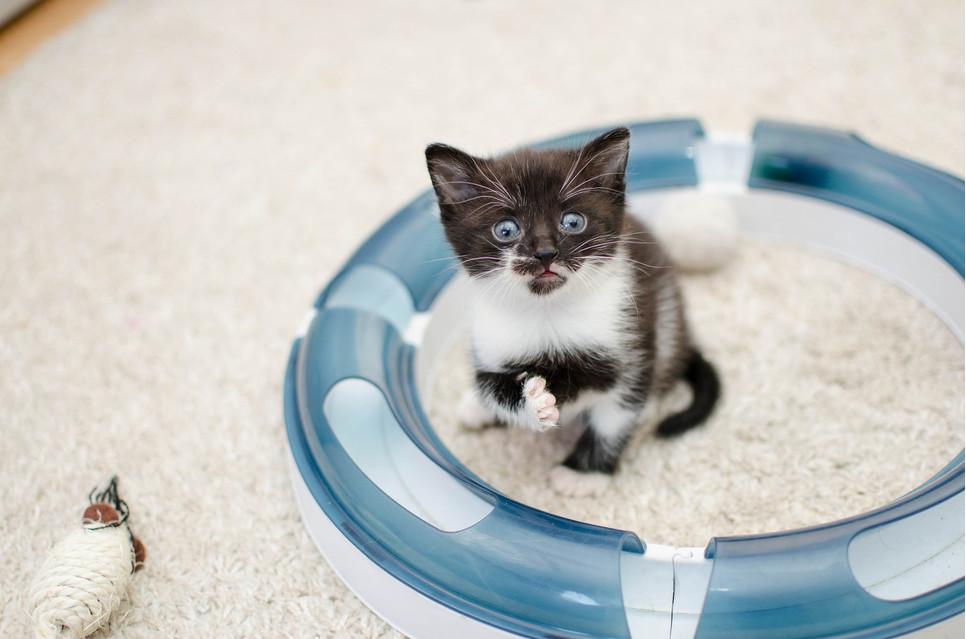 W nowym domu małemu kotu trzeba zapewnić spokój i pozwolić mu oswajać się z otoczeniem we własnym tempie.