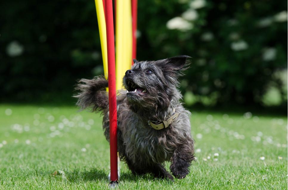 Plac zabaw dla psów to miejsce świetnej zabawy, która pozwala zacieśnić więź między opiekunem a zwierzęciem.