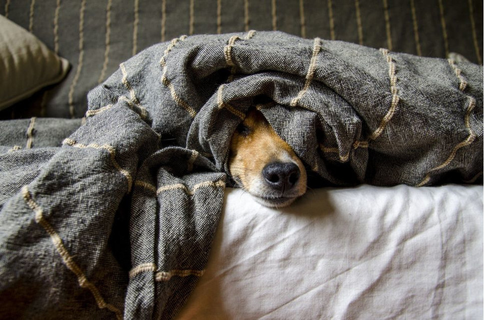 Jakie choroby mogą wywołać u człowieka psie pasożyty?