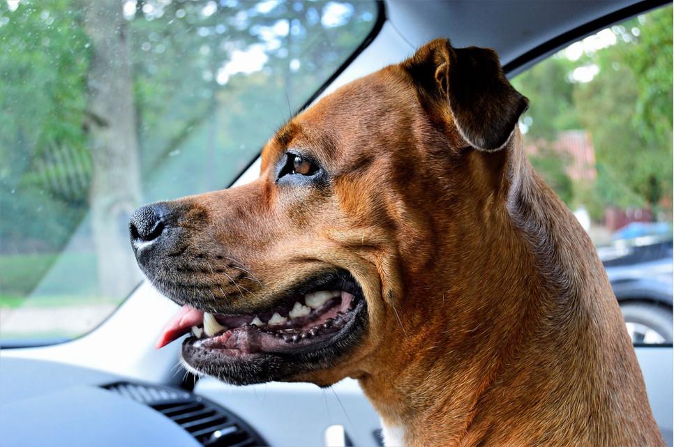 Opiekunowie muszą dbać o profilaktykę zapalenie dziąseł – u psa może ono stać się początkiem niebezpiecznych chorób.