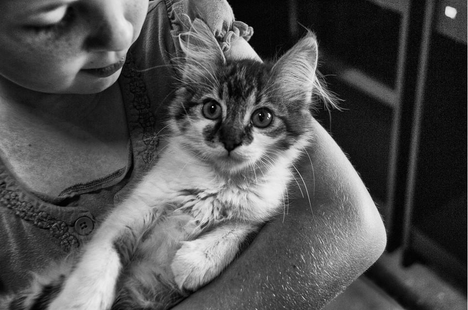 Koty dla dzieci powinna cechować czułość, ufność, towarzyskość, pogodne usposobienie. Dobre rasy to Maine Coon i Ragdoll.