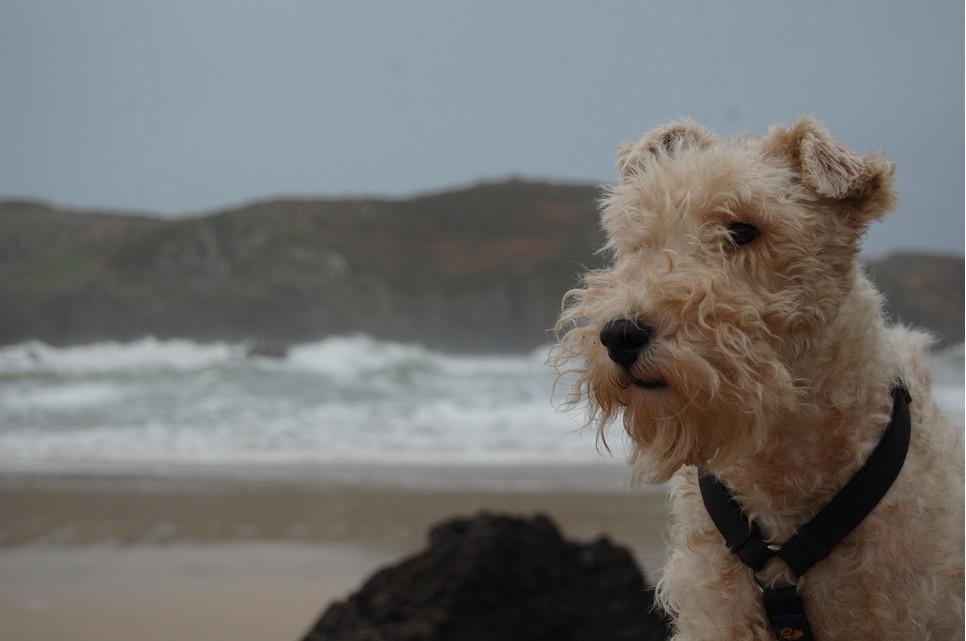 Foksterier szorstkowłosy i foksterier krótkowłosy to wyjątkowo aktywne i serdeczne psy myśliwskie, które znakomicie odnajdują się w rodzinie.