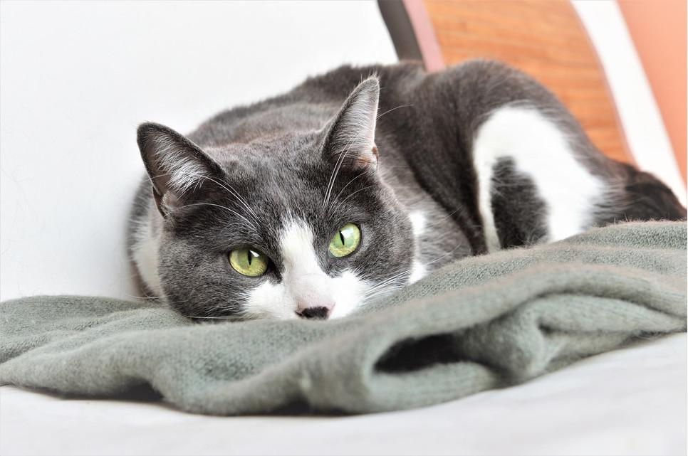 Mata węchowa pomaga wyciszyć kota, zmęczyć intelektualnie i zająć na długi czas.