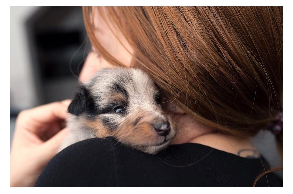 Przyczyny stresu u zwierząt. Jak pomóc zwierzętom w walce ze stresem?