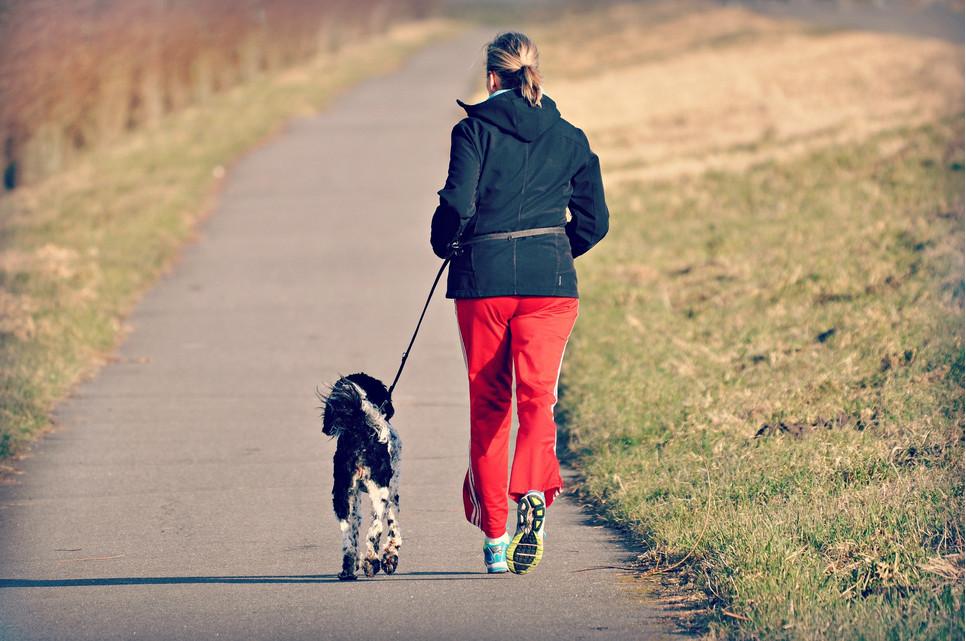 Jak przygotować psa do wspólnego biegania?