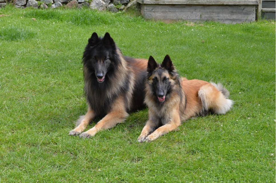 Cieczka u psa to trwający około 3 tygodnie okres w cyklu rozrodczym.
