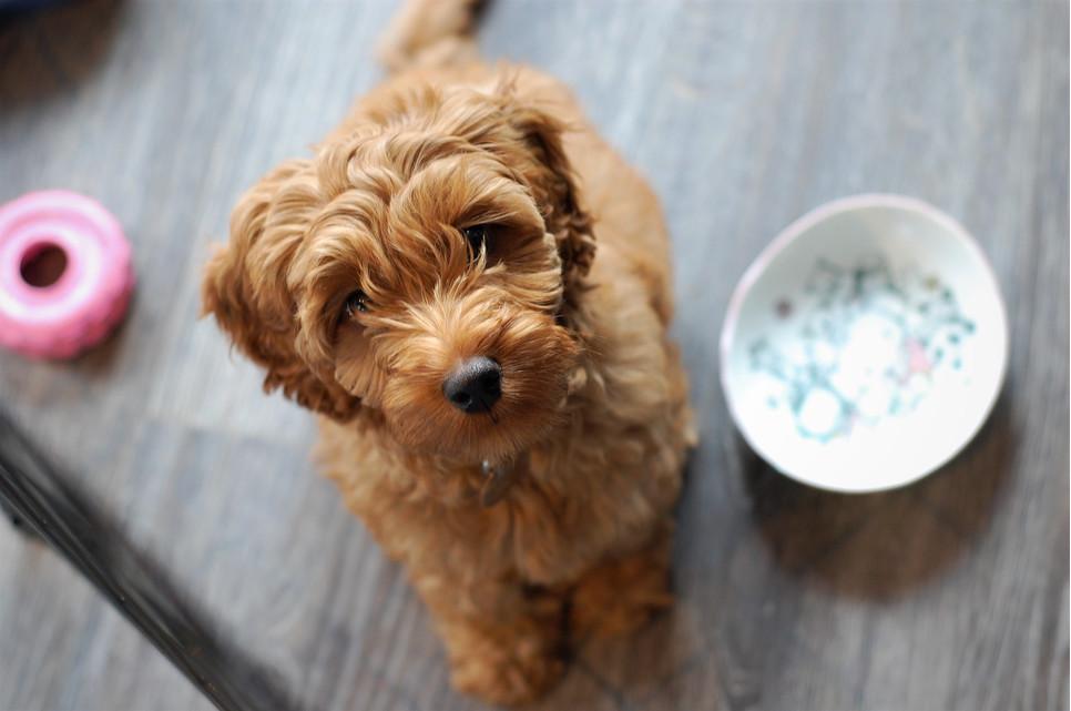 Wybierając smaczki dla szczeniaka, należy dokładnie czytać opakowania, na których powinna być zamieszczona informacja, od jakiego wieku mogą być stosowane.