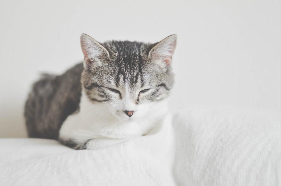Cukrzyca u kota to choroba, która zarówno dla zwierzęcia, jak i jego właściciela jest uciążliwa i przykra w dolegliwościach. Sprawdź, jak ją leczyć.